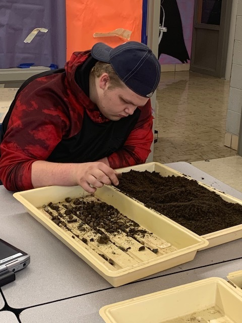 Ecology student is preparing soil for planting of micro greens.